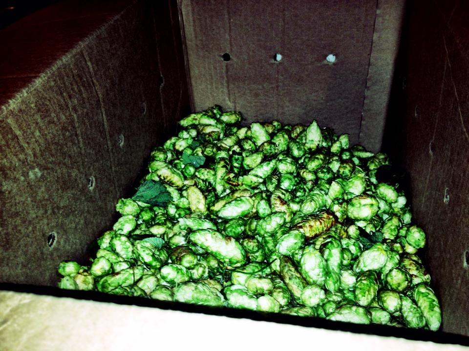 Wet Hops Honolulu Beerworks