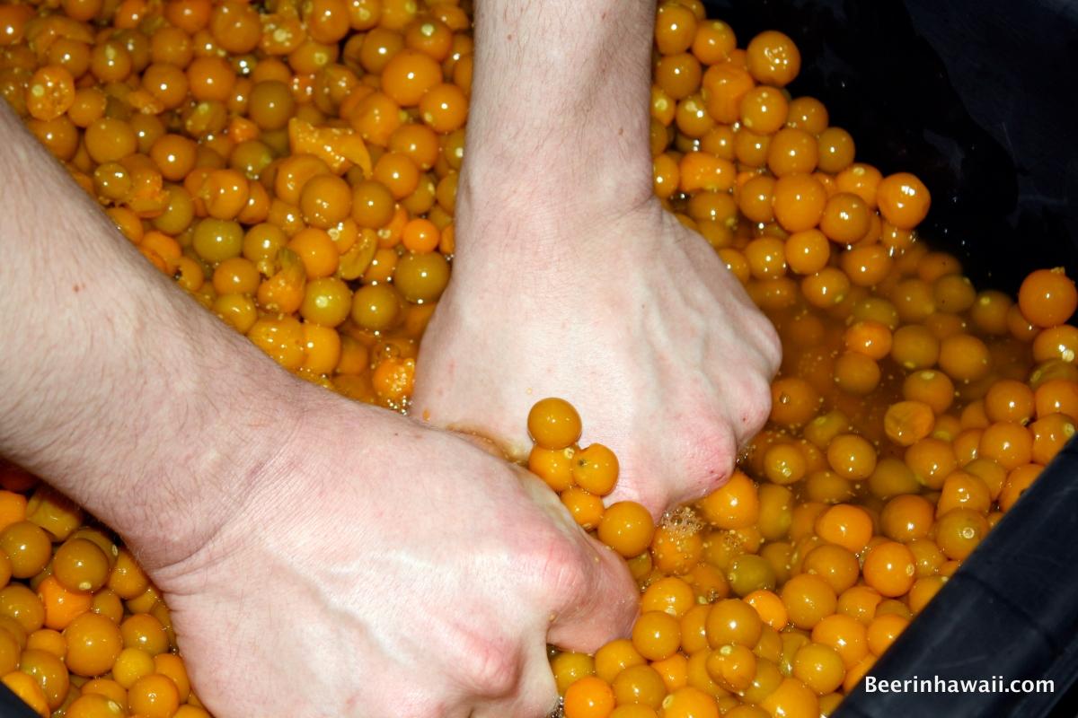 poha berries honolulu beerworks