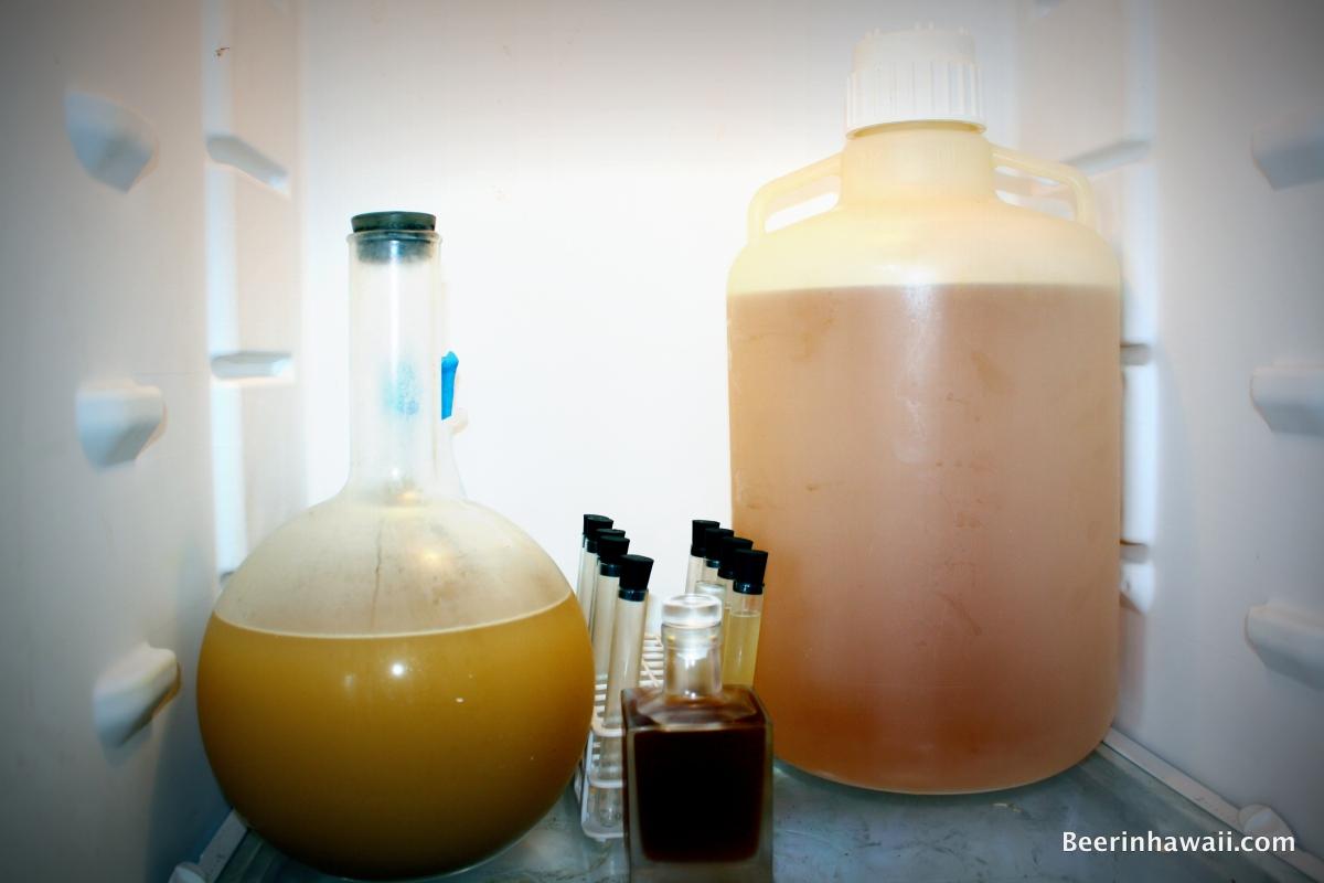 Ko Hana Rum Proprietary Yeast