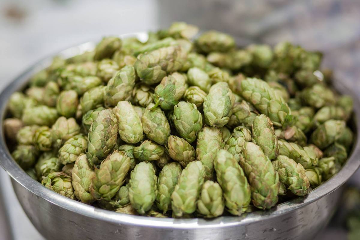 The Hawaii Fresh Hop Round Up 2015