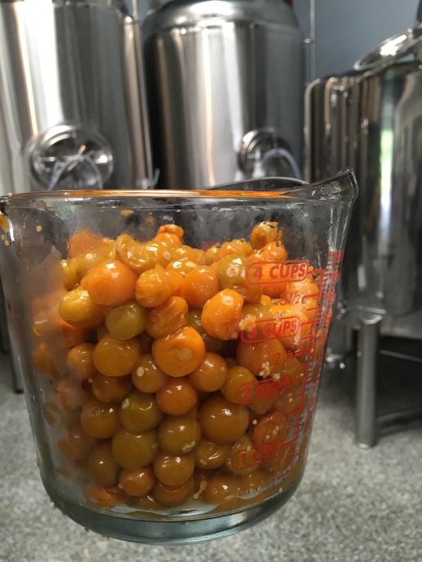 Lanikai Brewing Poha Berry Blond