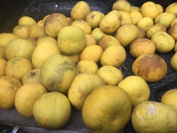 Hawaiian Jabong or pomelo fruit for lanikai brewing triple ipa